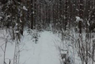 Talvisia polkuja