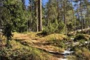 Kevään eka pitkä polkujuoksu: Sipoonkorpi Trail