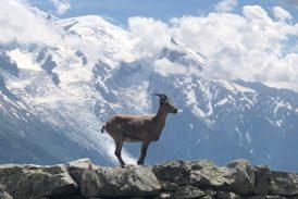 En episk löptur runt Mont Blanc